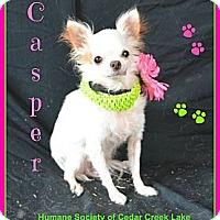 Adopt A Pet :: Casper - Plano, TX