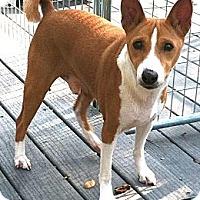 Adopt A Pet :: Jack - Seminole, FL