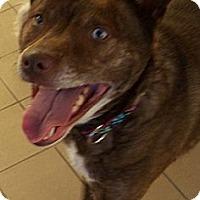 Adopt A Pet :: Ginger - Jackson, MI