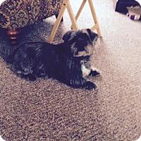 Adopt A Pet :: Lola - Acushnet, MA