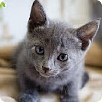 Adopt A Pet :: Sergei - Coral Springs, FL