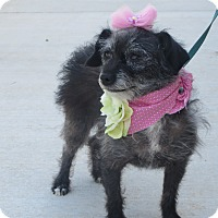 Adopt A Pet :: **LITTLE LUCY** - Stockton, CA