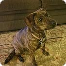 Adopt A Pet :: Coco 1(COURTESY POST)