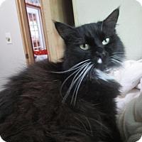 Adopt A Pet :: Roxy Socks - Witter, AR
