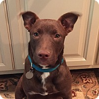 Adopt A Pet :: Abby - PORTLAND, ME