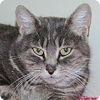 Adopt A Pet :: Helen-Low Fees/spayed - Red Bluff, CA