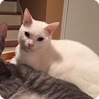 Adopt A Pet :: Lancelot - San Antonio, TX