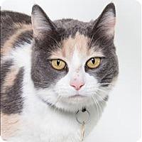 Adopt A Pet :: Aubree - San Luis Obispo, CA
