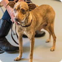 Adopt A Pet :: Jill - Burgaw, NC