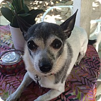 Chihuahua Mix Dog for adoption in Santa Monica, California - Mila