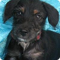 Adopt A Pet :: Sugar Cane Roscoe - Cuba, NY