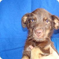 Adopt A Pet :: Nick - Oviedo, FL