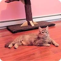Adopt A Pet :: Gaia - Verdun, QC