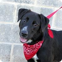Adopt A Pet :: Bigsby - Brattleboro, VT