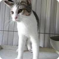 Adopt A Pet :: Jonathan - Stuart, VA