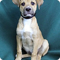 Adopt A Pet :: VICKI - Westminster, CO