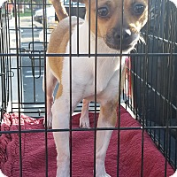 Adopt A Pet :: BAILY - Gustine, CA