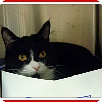 Adopt A Pet :: OREO - Marietta, GA