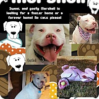 Adopt A Pet :: Marshall - Des Moines, IA