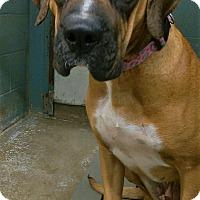 Adopt A Pet :: Lulu - Joplin, MO