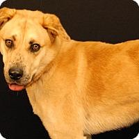 Adopt A Pet :: Fluffy - Newland, NC