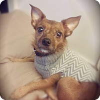 Adopt A Pet :: Tracy - Indianapolis, IN