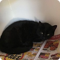 Adopt A Pet :: Oscuro - Gadsden, AL