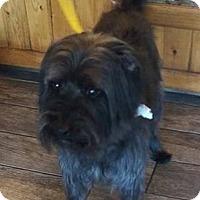 Adopt A Pet :: Lenny - Las Vegas, NV