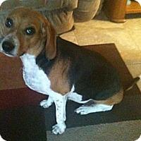 Adopt A Pet :: Sofie - Palm Bay, FL