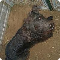 Adopt A Pet :: Lucky - Ranger, TX