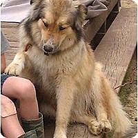 Adopt A Pet :: Jack  (URGENT) Reduced - Staunton, VA