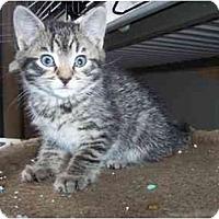 Adopt A Pet :: Jax - Frenchtown, NJ