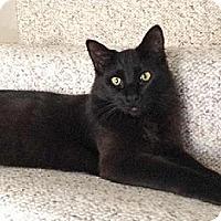Adopt A Pet :: Misty - La Jolla, CA