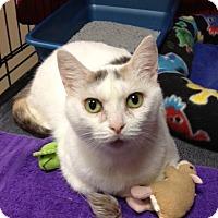 Adopt A Pet :: Christa - Byron Center, MI