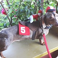 Adopt A Pet :: OSCAR WILDE - Portland, OR
