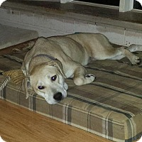 Adopt A Pet :: Brandy - Homer, NY
