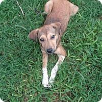 Adopt A Pet :: Jeannie - Middletown, RI