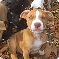Adopt A Pet :: Sanka Adoption pending - Manchester, CT