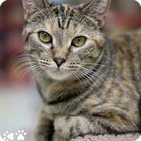 Adopt A Pet :: Tasha - Merrifield, VA