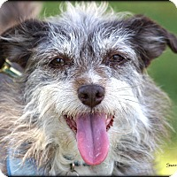 Terrier (Unknown Type, Medium) Mix Dog for adoption in Vista, California - Sweet Pea