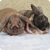 Adopt A Pet :: Mindy & Brindy - Bonita, CA