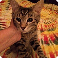 Adopt A Pet :: Rezzie - St. Louis, MO