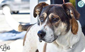 Hound (Unknown Type) Mix Dog for adoption in Kimberton, Pennsylvania - Lois