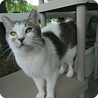 Adopt A Pet :: Gloria - Jupiter, FL