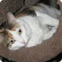 Adopt A Pet :: Teka - Powell, OH