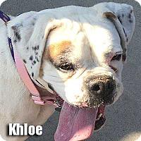 Adopt A Pet :: Khloe - Encino, CA