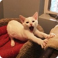 Adopt A Pet :: Lightning - Mission Viejo, CA