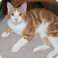 Adopt A Pet :: Goldeen - Fairfax, VA