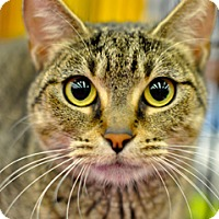Adopt A Pet :: Whisper - Great Falls, MT