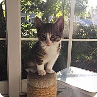 Adopt A Pet :: Annette - Madison, NJ